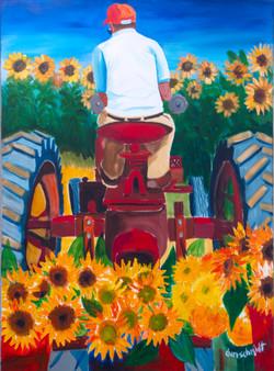 Tractor Hauling Sunflowers_3000