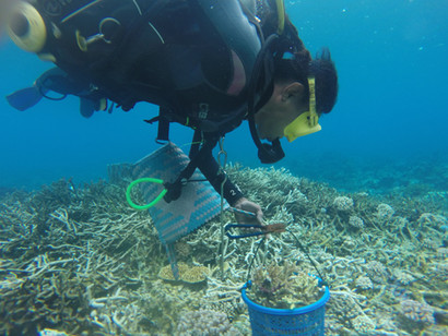 Coral transplanting project with University Bandung