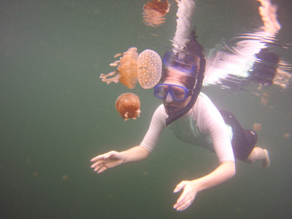 Swim with stingless jellyfish in the Togean Islands