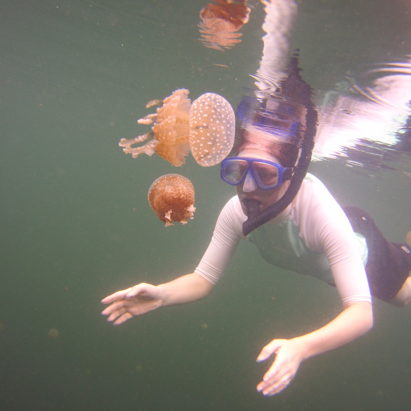 swim with stingless jellyfish