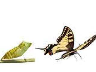 Değişim İçin Ödediğin Her Bedel Güzeldir