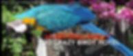 Macaws, Cockatoos Singing in the Rain