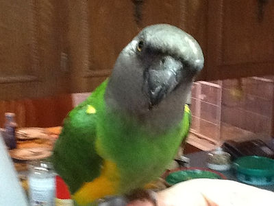 Parrot Boarding Vancouver Island, Bird Boarding, Budgies to Macaws, Slater