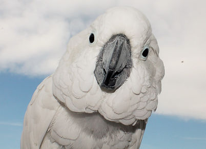 parrot cockatoo boarding