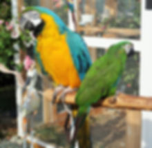 severe macaw parrot boarding vancouver island