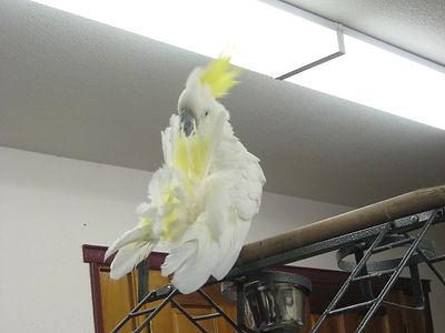 Parrot Bird Boarding