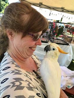 Vinney Citron Cockatoo