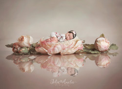 newborn photography bergen county