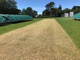 A Wicket Fit for Cricket