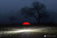 光る地面と赤い傘.jpg