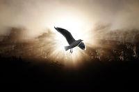 逆光の鳥.jpg