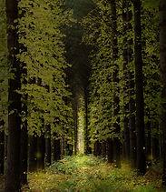 林道輝く光.jpg