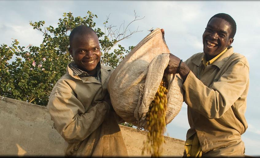Malawi's first Fair Trade Estate