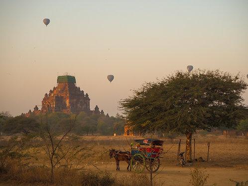 myanmar | एक गधा