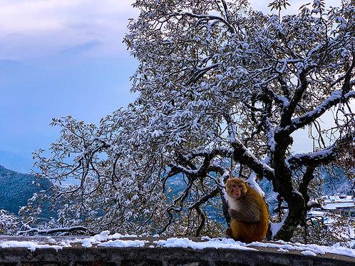 monkey in the snow | बर्फ में एक बंदर