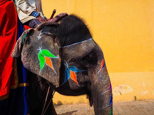 a colourful elephant | रंगीन हाथी