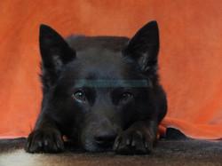 Icaro is watching you W