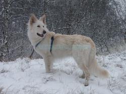 Diana im Schnee W