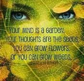 Plant positivity. Uproot negativity.