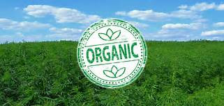 IF YOU DO JUST ONE THING – MAKE ONE CONSCIOUS CHOICE – THAT CAN CHANGE THE WORLD, GO ORGANIC
