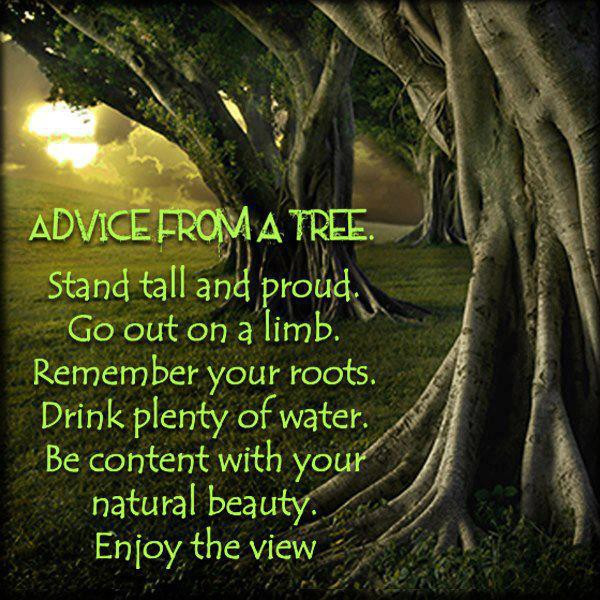 ADVISE FROM A TREE ~~FUNCTIONAL MEDICINE