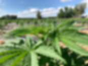farm-july-2019.jpg
