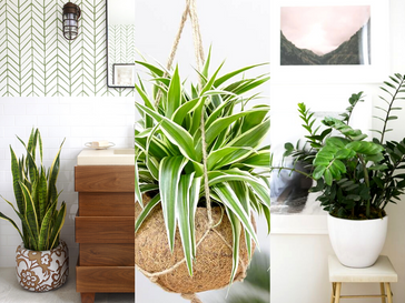 8 Plants That Thrive in the Bathroom