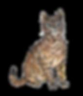 chat_ajusté.png