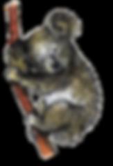 koala_ajusté.png