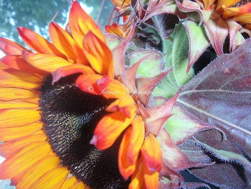 Surreal+Sunflower.jpg