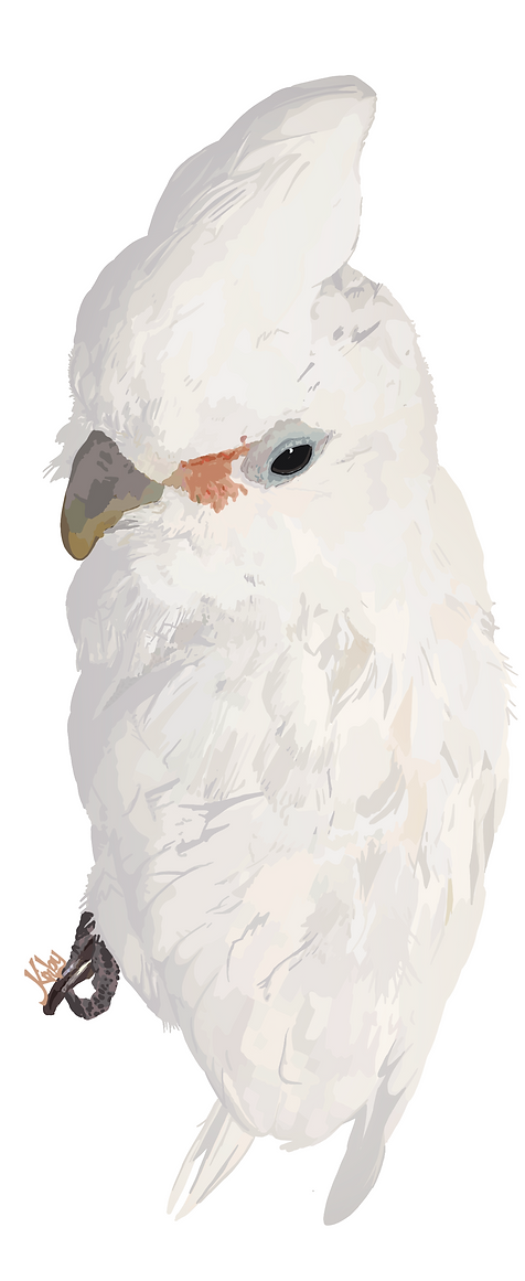Glamour Shot with Bill the Cockatoo.png