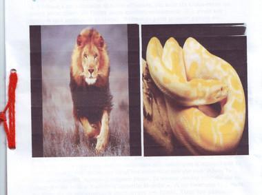 Le lion et le python
