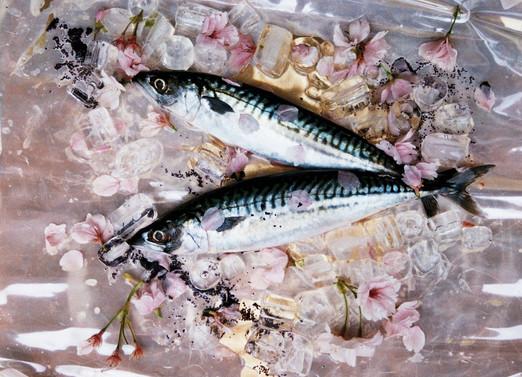 fisk2.jpg