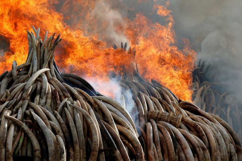 kenya-ivory-burn_1.jpg