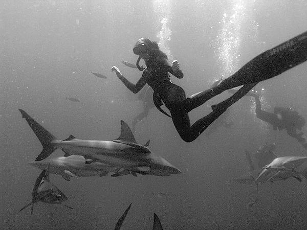 Olivia Freediving _ Aliwal Shoal with black tip reef sharks_edited.jpg