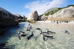 boulders-beach-penguins.jpg