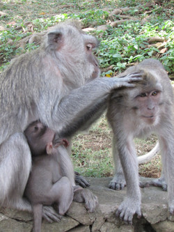 Templo de monos, Indonesia