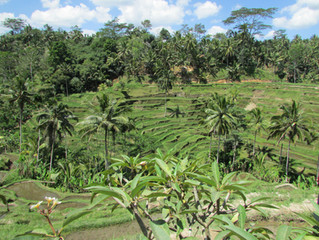 ¿Vas o quieres ir a Indonesia? Consejos que te pueden servir