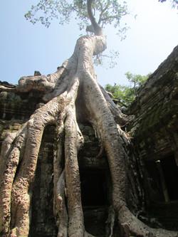 Tomb Rider, Camboya