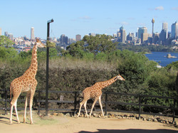 Zoológico Sydney
