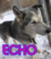 Echo 2.jpg