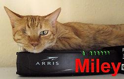 Miley 2.jpg