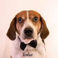 Oscar 3.1.jpg