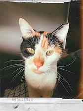 Kit Kat PA 2.0.jpg