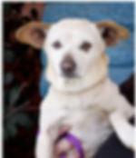 Leica 1.0.jpg
