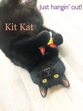 Kit Kat 1.jpg