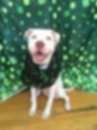 Winnie 3.jpg