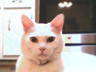 Casper 1.jpg