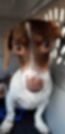 Cookie III 2.jpg
