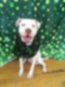 Winnie 1.jpg